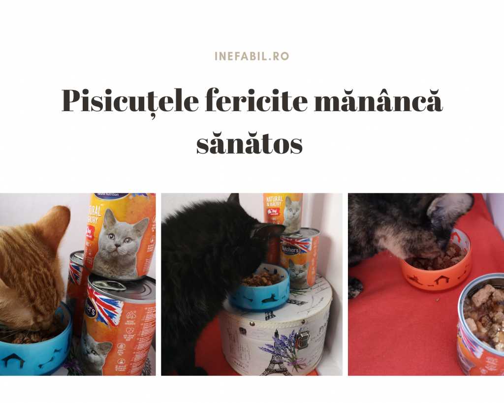 pisicutele fericite mananca sanatos