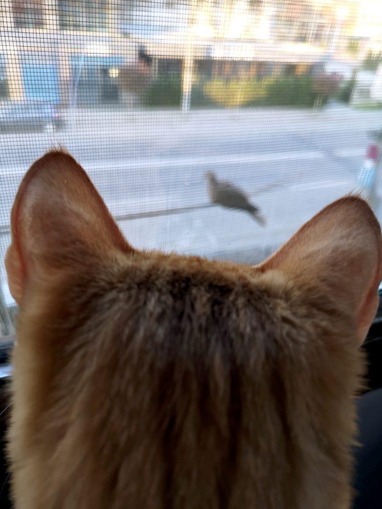 ari-and-birds