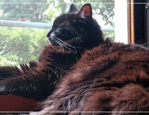 tips-and-tricks-pentru-pisicute-fericite